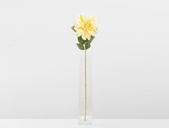 Betta Yıldız Çiçeği - Sarı-
